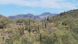 Graet views of the desert