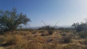 Early morning hike for Kuma
