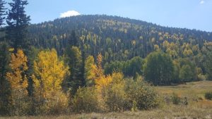Fall color at Red River