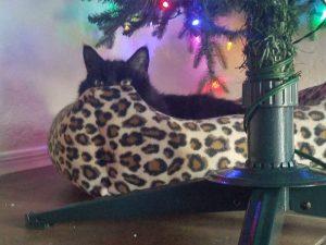 Edmond loves his tree