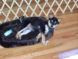 Kuma in his new home
