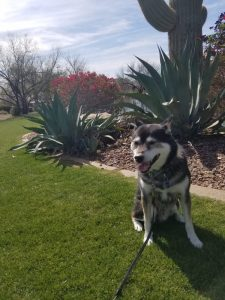 Kuma is a happy dog
