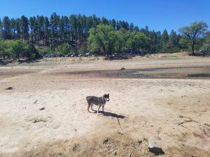 Lynx Lake is very low
