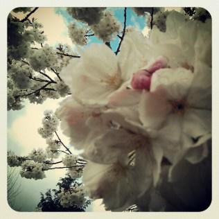 Blossom Love