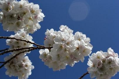 Blossom in April