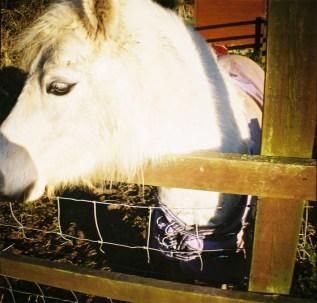 Little Horse II