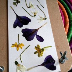 pressed flowers 3