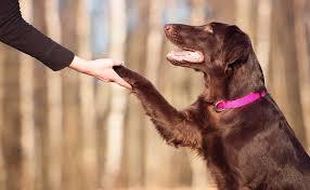 Adiestramiento conductista de perros