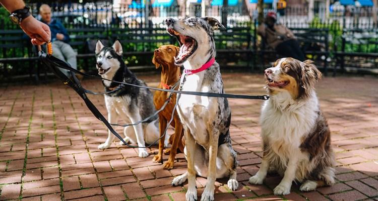Adiestramiento etológico de perros