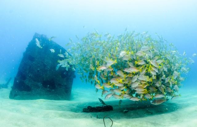 Nautilus Dive Tech Discover Scuba Diving
