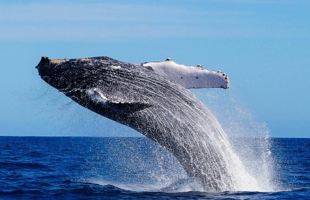 Cabo Trek Whale Watching