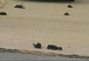 uccelli-morti