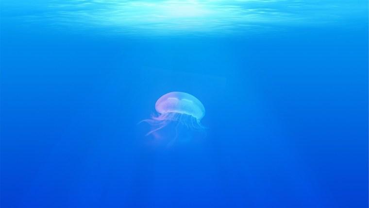 Le meduse, affascinanti ma pericolose per l'uomo