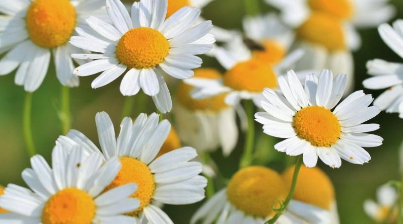 Piante, fiori e spezie per la festa della donna