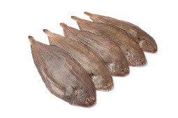 Image result for a picture of a sole fish