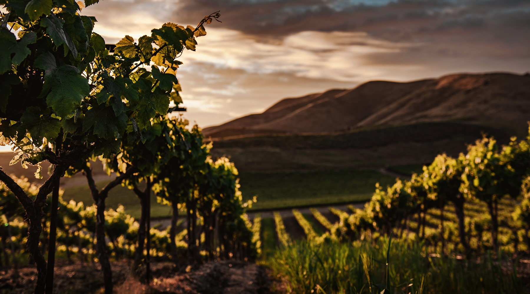 Long Creek Wines