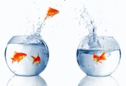 peces nadando en el agua de las peceras