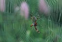telas de arañas