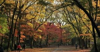 FreeGreatPicture.com 30382 kamo royal ancestral shrine autumn