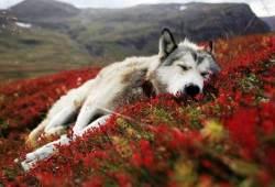 Por qué giran en círculos los perros antes de dormir