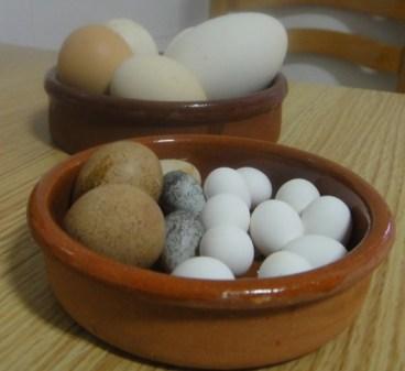huevos de aves