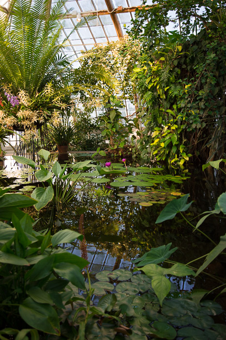 Lily Pads in the Aquatic Room at Conservatory of Flowers in San Francisco | Lost Not Found | SF Travel Guide