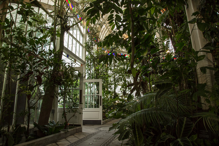 Plants inside Conservatory of Flowers in San Francisco | Lost Not Found | SF Travel Guide