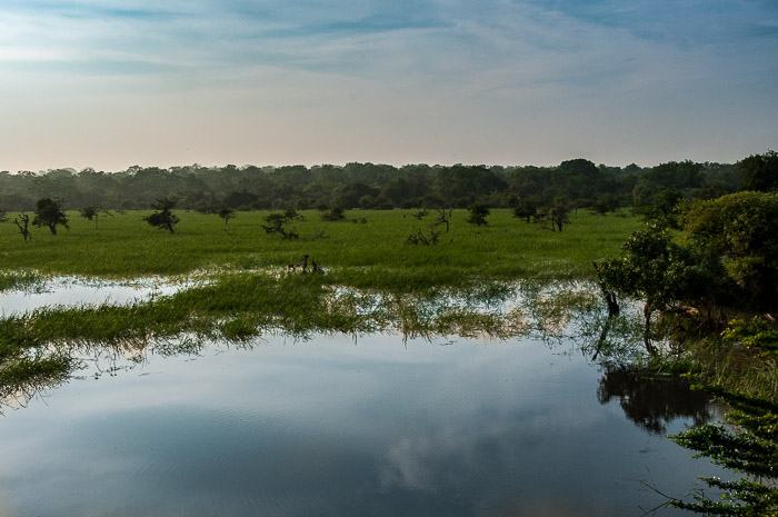 Scenery at Yala National Park in Sri Lanka | LOST NOT FOUND | Sri Lanka Itinerary | Sri Lanka Travel | Asia Travel | Things to Do in Sri Lanka | 10 Days in Sri Lanka | Safari