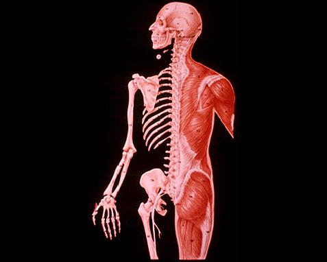 019 - Anatomy 2, World Book