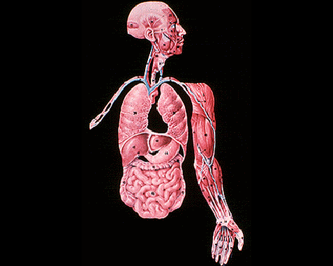 023 - Anatomy 6, World Book