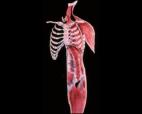 024 - Anatomy 7, World Book