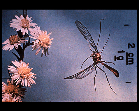 051 - Flying insect with flowers, Borne on the Wind, Stephen Dalton