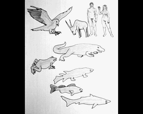 052 - Diagram of vertebrate evolution, Jon Lomberg