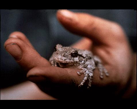056 - Tree toad, Dave Wickstrom
