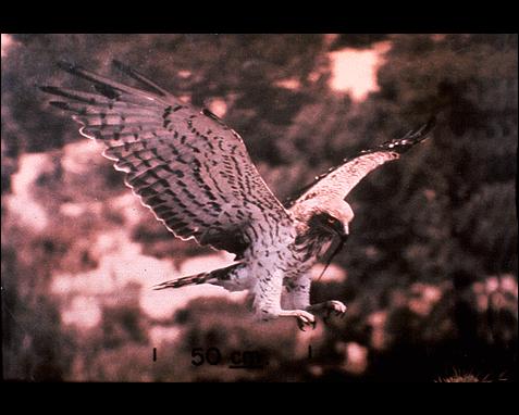 058 - Eagle, Donona, Taplinger Publishing Co