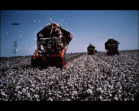 075 - Cotton harvest, Howell Walker