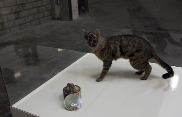 Idiots - Whiskas - Kat met wat kraaltjes en een kattenvoerblikje