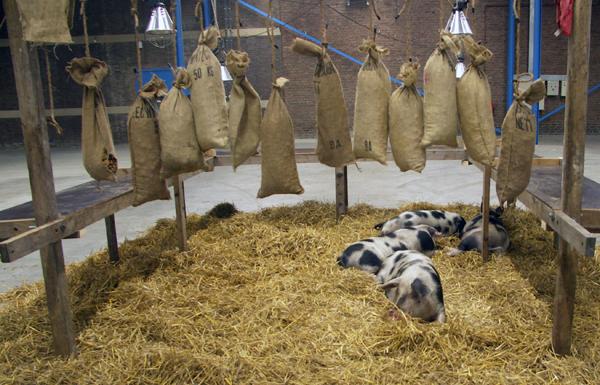 Sjef Meijman en Elles Kiers - Het varkensjaar - Echte varkens