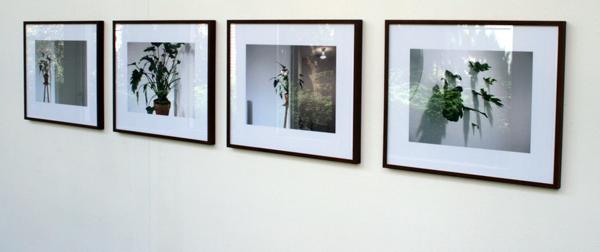 Ruben Bellinkx - Philodendron Xanad - 4 foto's van installatie bij Heden, Den Haag