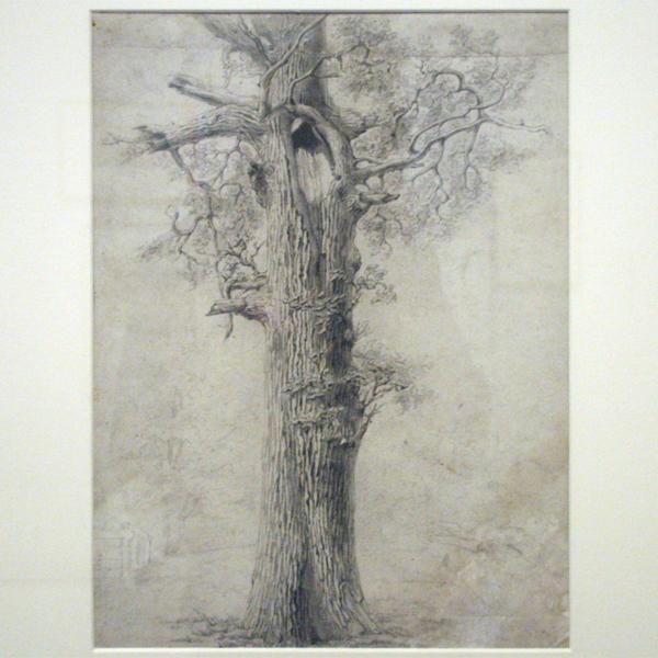 Willem Maris - Boomstudie - Potlood op papier