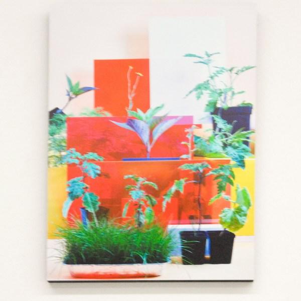 Eva Roovers - Nachtschade - Archival Inkjet Print
