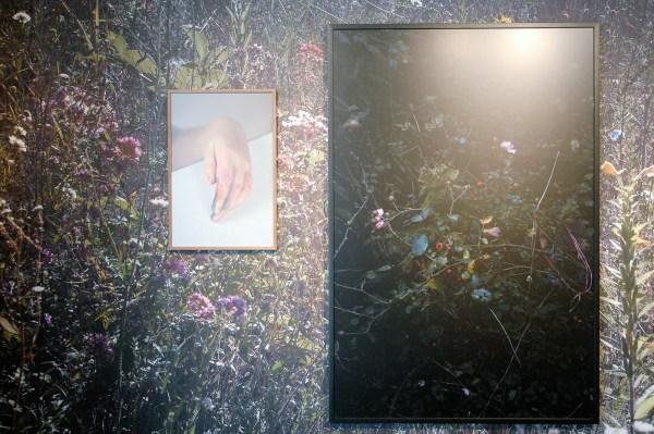 Elspeth Diederix - Kays Hand - 60x40cm C-print & Rosa New Dawn - 150x100cm C-Print