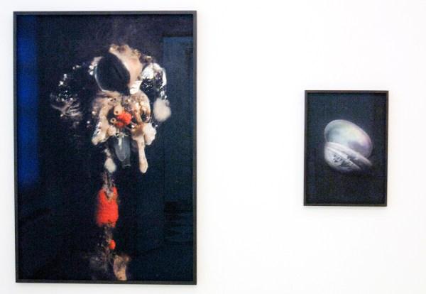 Elspeth Diederix - Birdsponge - Fine Art print & Pastelshell - Ultrachrome print