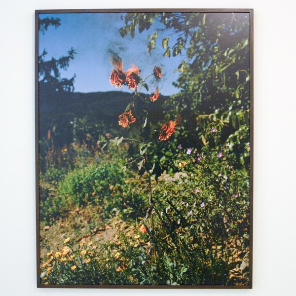 Elspeth Diederix - Flameflower - Ultrachrome print