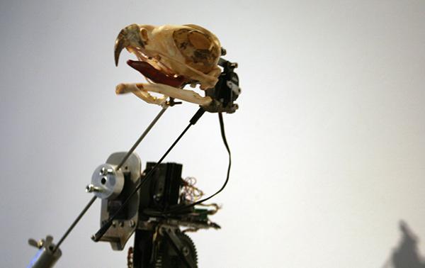Christiaan Zwanikken - Mister Houdin, Don't Forget Your Bird - 50x90x40cm Vogelschedel, kenetica, leer en electronica (detail)