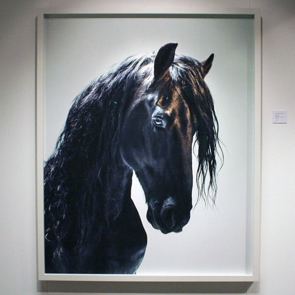 Jaski Art Gallery - Jill Greenberg