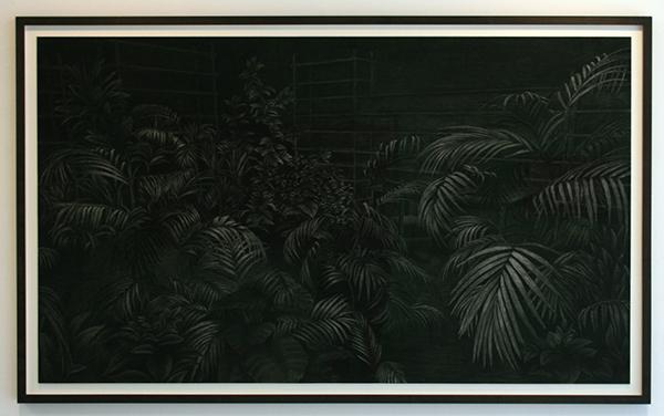 Levi van Veluw - Plants - 205x120cm Houtskool op papier
