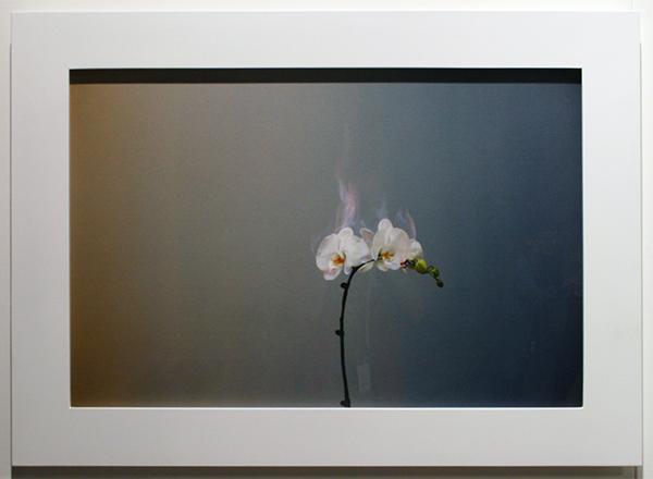 M97 Gallery - Jiang Zhi
