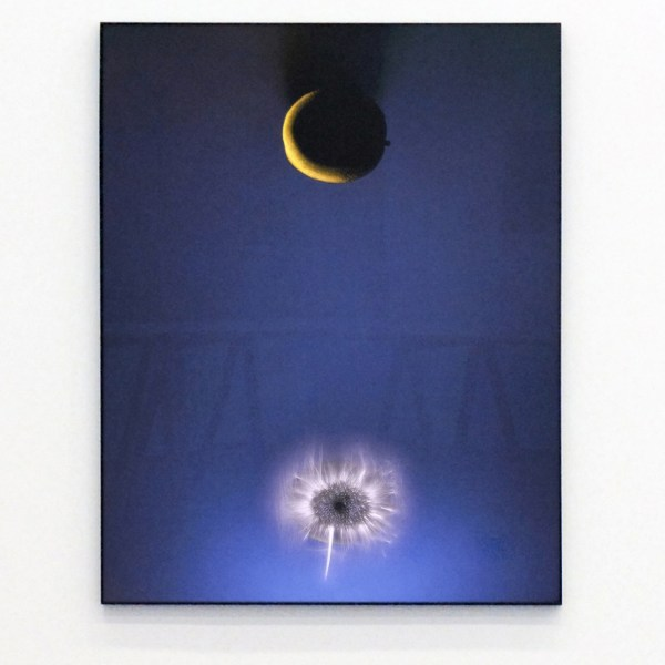 Paul den Hollander - Luminous Garden #85 - 120x95cm C-print 2011