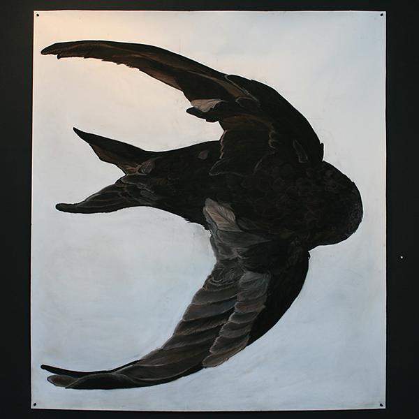 Roos Holleman - Gierzwaluw - 143x150cm Pastel en Siberisch krijt op papier